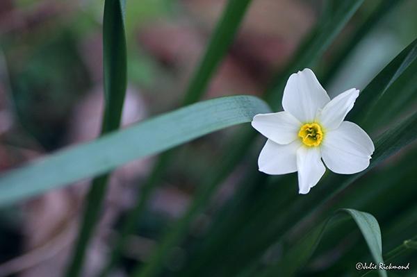 Flowers_C5_5738 (thumb)