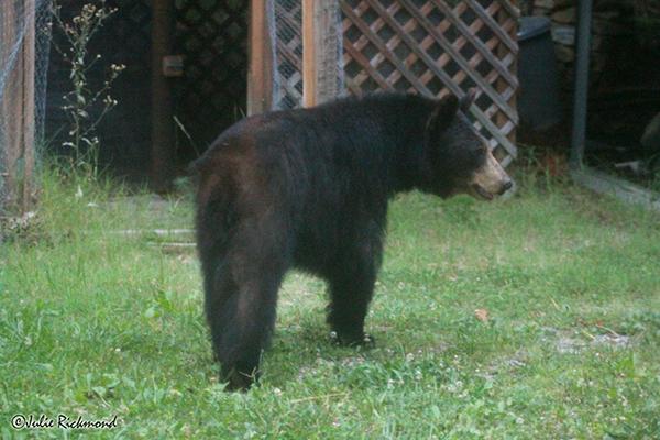 Bear_C6_6856 (thumb)