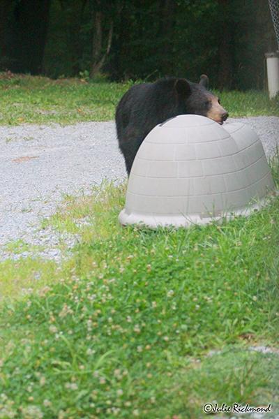 Bear_C6_6894 (thumb)