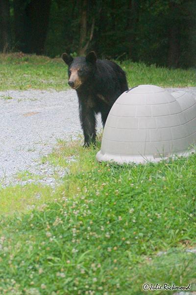 Bear_C6_6896 (thumb)