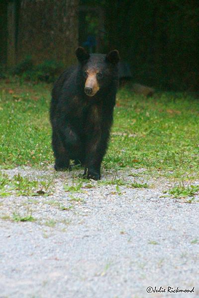 Bear_C6_6908 (thumb)
