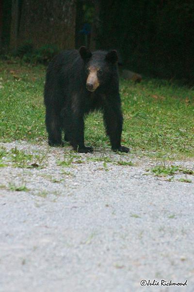 Bear_C6_6910 (thumb)