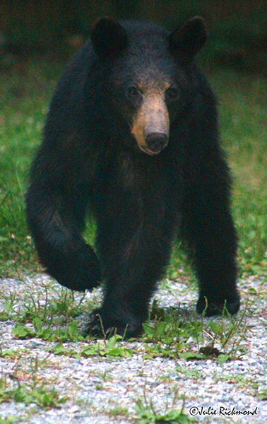 Bear_C6_6920 (thumb)
