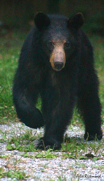 Bear_C6_6921 (thumb)