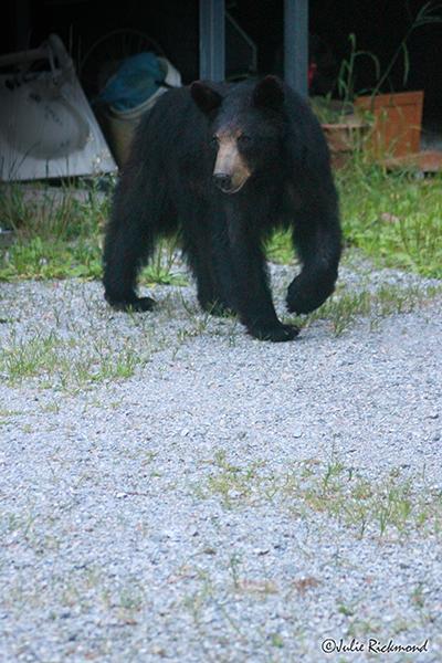 Bear_C6_6927 (thumb)