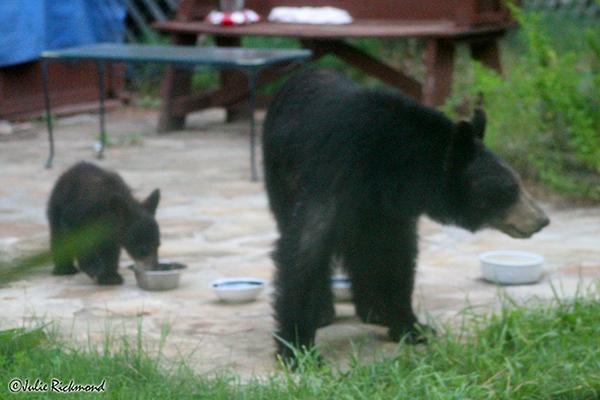 Bears_C6_6850 (thumb)